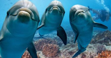 The Social Brain Hypothesis Links Dolphins, Whales And Humans To Brain Mass In Individuals