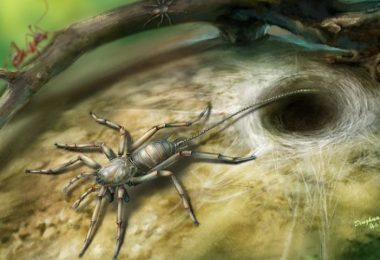 Tailed Spider Found Encased In 100 Million Year Old Amber Tomb