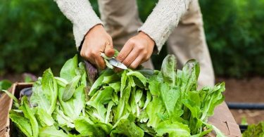 Which Leafy Greens Are The Most Nutritious? We've Done The Research For You