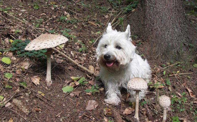 Lurking Danger In Your Back Yard - Watch Out For These Deadly Mushrooms